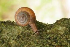 蜗牛爬行 免版税库存照片