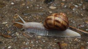 蜗牛特写镜头 股票视频