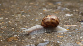 蜗牛特写镜头 影视素材