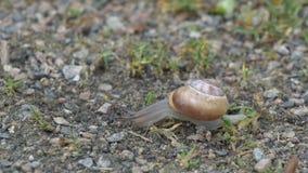 蜗牛特写镜头