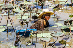 蜗牛狩猎 图库摄影