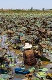 蜗牛狩猎 库存照片