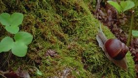 蜗牛生活在森林里 股票视频