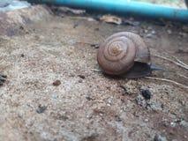 蜗牛生活 免版税库存图片