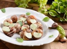 蜗牛用大蒜黄油 图库摄影