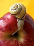 蜗牛用苹果 免版税图库摄影