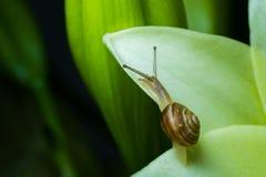 蜗牛的图片在绿色叶子和花的 库存图片