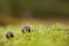 蜗牛的特写镜头 免版税库存照片