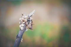 蜗牛的议院 库存照片
