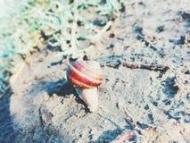 蜗牛的道路 免版税库存照片