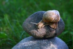 蜗牛石头 免版税库存照片