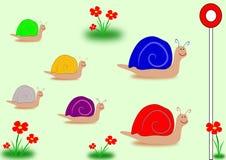 蜗牛种族大选颜色 免版税库存图片