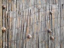 蜗牛竞争用慢动作运动的方式 库存图片