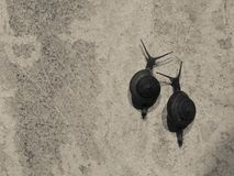 蜗牛竞争 免版税图库摄影