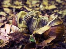 蜗牛联接 免版税库存图片