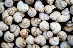 蜗牛背景 免版税库存图片