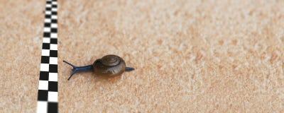 蜗牛赛跑 库存图片