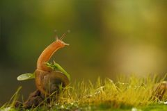 蜗牛身分 图库摄影