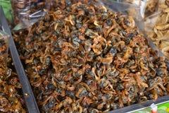 蜗牛辣flavorsÂ海鲜处理 免版税库存照片
