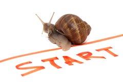 蜗牛运动员 库存图片