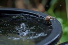 蜗牛运动 库存照片