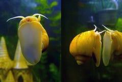 蜗牛黄色细颈瓶 库存照片