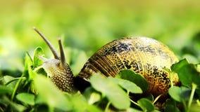 蜗牛,关闭 股票视频