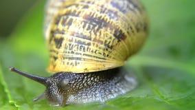 蜗牛,关闭 股票录像