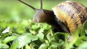 蜗牛,关闭 影视素材
