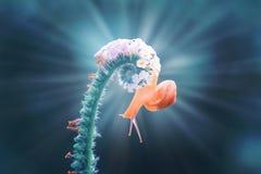 蜗牛,在花的蜗牛有蓝色背景 库存照片