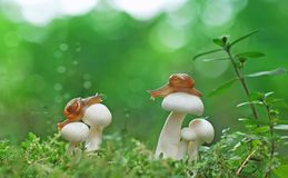 蜗牛,蘑菇,草 库存照片