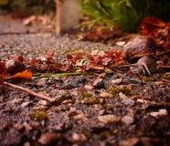 蜗牛系列 免版税库存照片