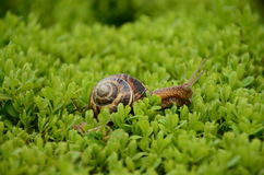 蜗牛(宏指令) 免版税库存图片