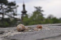 蜗牛 期初的 免版税库存照片