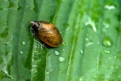 蜗牛 植物的叶子 图库摄影