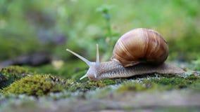 蜗牛 股票视频