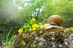 蜗牛 库存照片