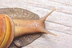 蜗牛 免版税库存照片