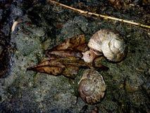 蜗牛 免版税库存图片