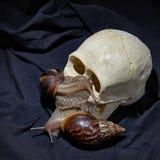 蜗牛achatina在万圣节 南瓜 幽默照片 库存图片