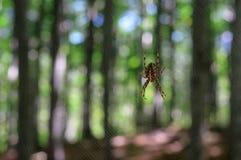 蜘蛛、网和bokeh圈子 库存图片