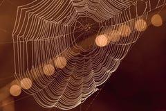 蜘蛛与亮点的` s网在背景中 免版税库存图片