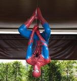 蜘蛛人垂悬 库存图片
