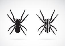 蜘蛛传染媒介在白色背景的 昆虫 敌意 皇族释放例证