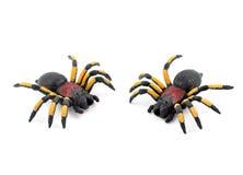 蜘蛛储蓄图象 免版税图库摄影