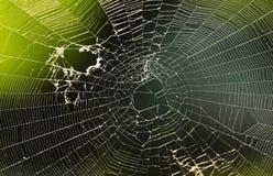 蜘蛛净额 免版税库存照片