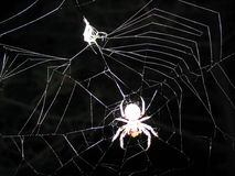 蜘蛛受害者 免版税库存图片