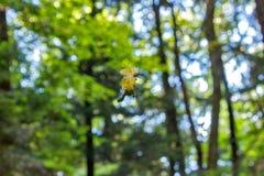 蜘蛛叶子下落的叶子 一spiderweb的森林场面在拿着露水和一片黄色和棕色叶子的一个秋天早晨 免版税图库摄影