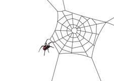 蜘蛛向量万维网 免版税图库摄影