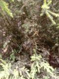 蜘蛛和万维网 生活成为的风险自信心只带领达到 免版税图库摄影